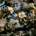 fruehling_2009-107-of-34