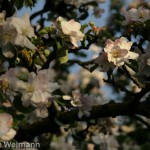 fruehling_2009-108-of-34