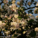 fruehling_2009-110-of-34