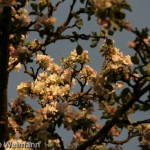 fruehling_2009-111-of-34