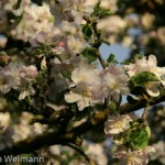 fruehling_2009-121-of-34