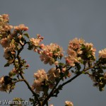 fruehling_2009-122-of-34