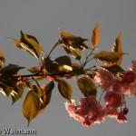 fruehling_2009-127-of-34