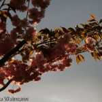 fruehling_2009-128-of-34