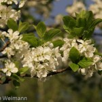 fruehling_2009-133-of-34