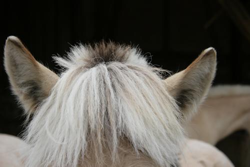 Kamillos Ohren und sein Busch-Schopf