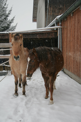 Guck, es schneit draußen!